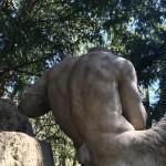 Auch der Rücken des Pan kann entzücken ;)