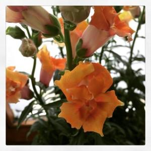 Wer hätte gedacht, dass ich Blumen irgendwann in meinem Leben noch mal toll finde?!